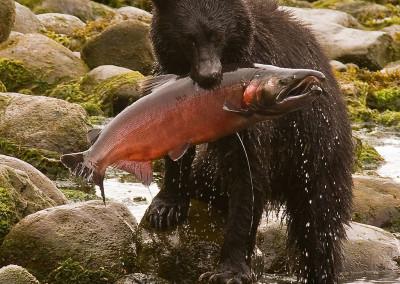 bears20080926-IMG_7722