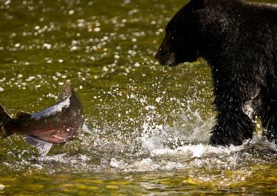 bears20081018-IMG_2276