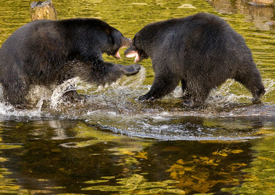 bears20081027-IMG_7207