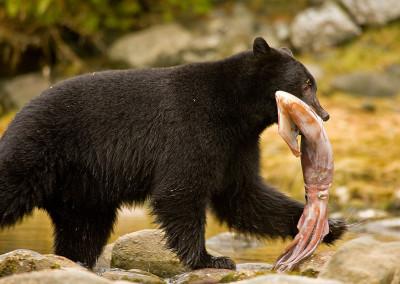 bears20090930-IMG_5408