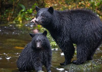 bears20091016-IMG_7311