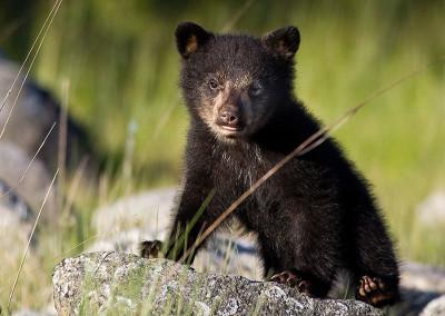 bears20120528-IMG_1126