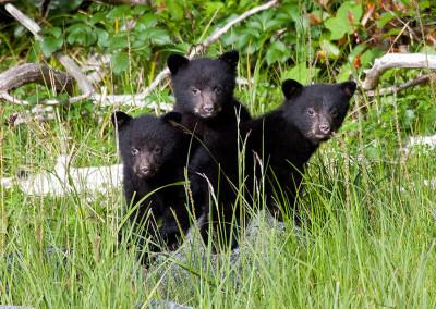 bears20120614-IMG_1677