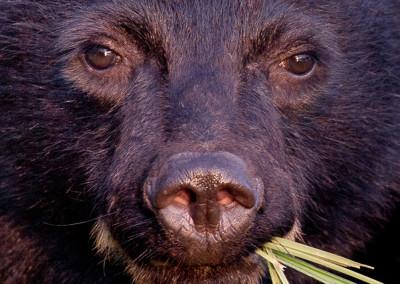 bears20120708-IMG_4202