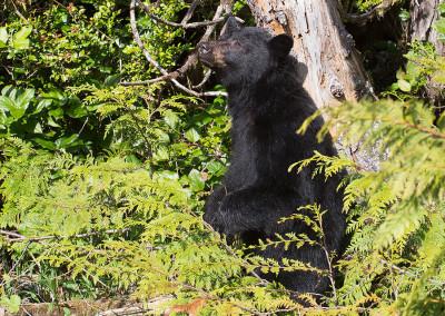 bears20140505-IMG_2282