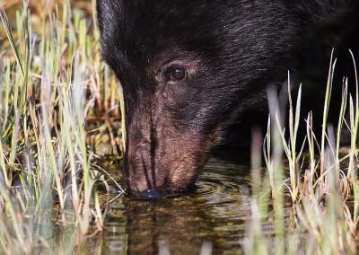 bears20140505-IMG_2318