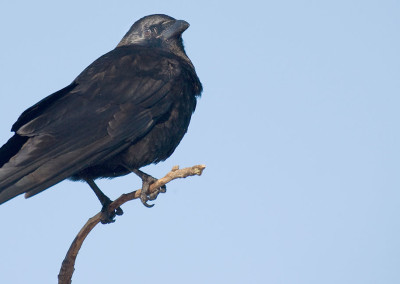 crows20120117-IMG_3845
