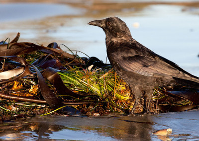 crows20130925-IMG_6873