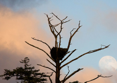 eagle20110216-IMG_1793