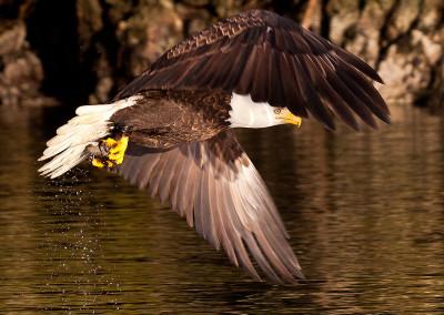 eagle20130217-IMG_5272