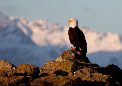 eagle20130219-IMG_5724