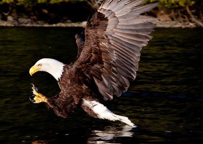 eagle20130318-IMG_7381