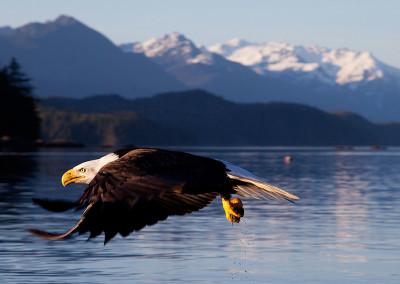 eagle20130330-IMG_8750