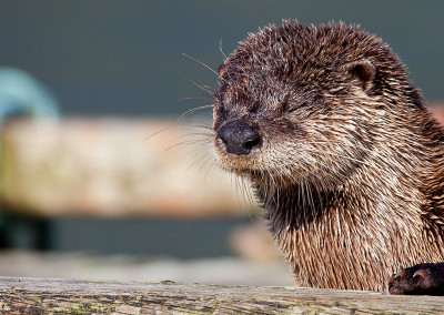 riverotters201306182