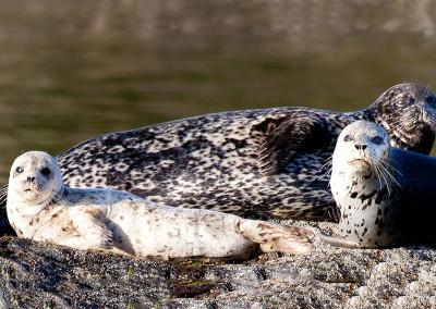 Sweet Seals