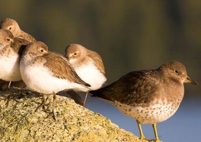 Adorable Shorebirds