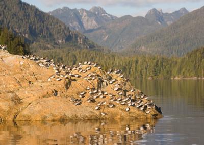shorebirds20111115-IMG_5686