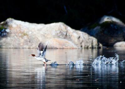 shorebirds20130331-IMG_8881