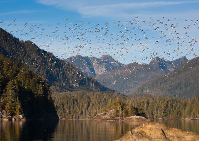 shorebirds20140123-IMG_3073