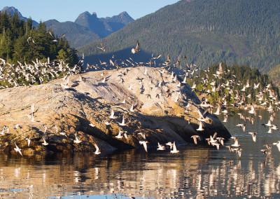shorebirds20141110-IMG_9785