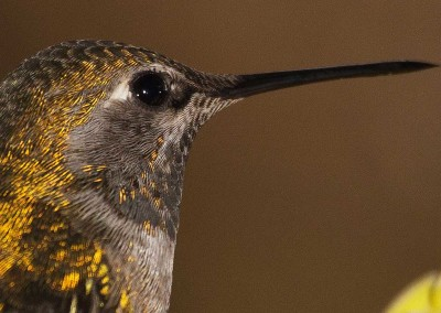 tofinowinterwildlifehummingbird20141219-IMG_3074