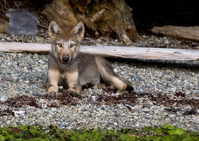 wolves20110801-IMG_2872