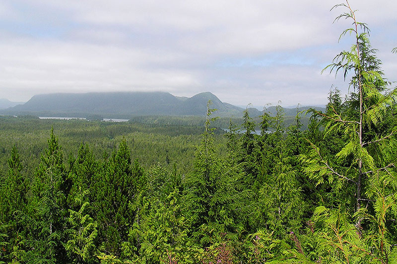 Forest, Ocean, Mountain Views, Radar Hill, Tofino, BC