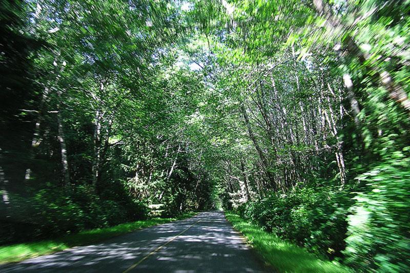 Grice Bay Road, Pacific Rim National Park, Tofino, BC
