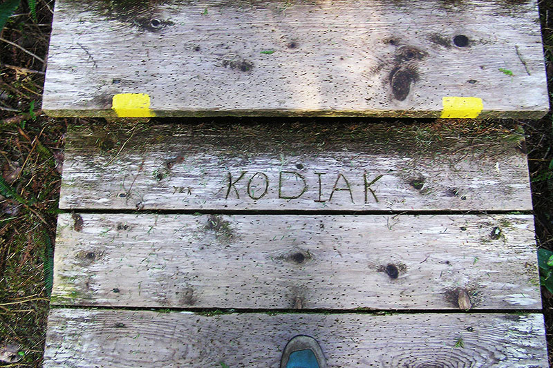 Tofino Hot Springs Boardwalk Planks