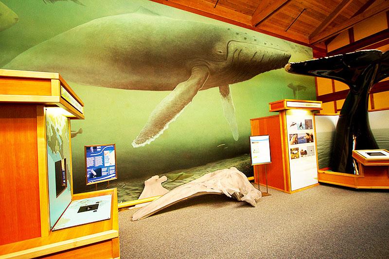 Kwistis Visitor Centre, Pacific rim National Park, Tofino, BC