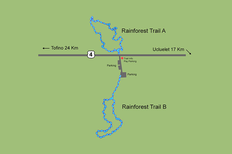 Rainforest Trail, Pacific Rim National Park, Tofino, BC