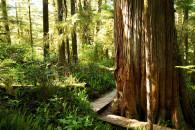 Tofino Rainforest Trail, Pacific Rim National Park