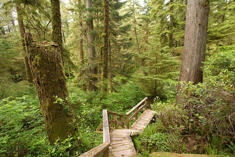Rainforest Trail A, Pacific Rim National Park, Tofino, BC