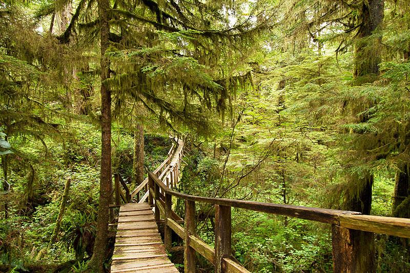 Rainforest Trail B, Pacific Rim National Park, Tofino, BC