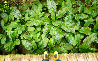 10 Things in a Tofino Rainforest