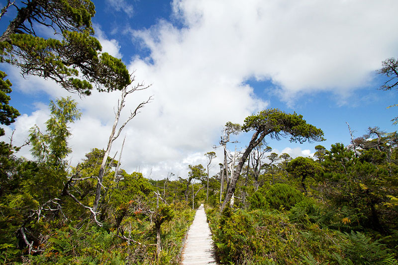Shorepine Bog Trail, Pacific Rim National Park, Tofino, BC