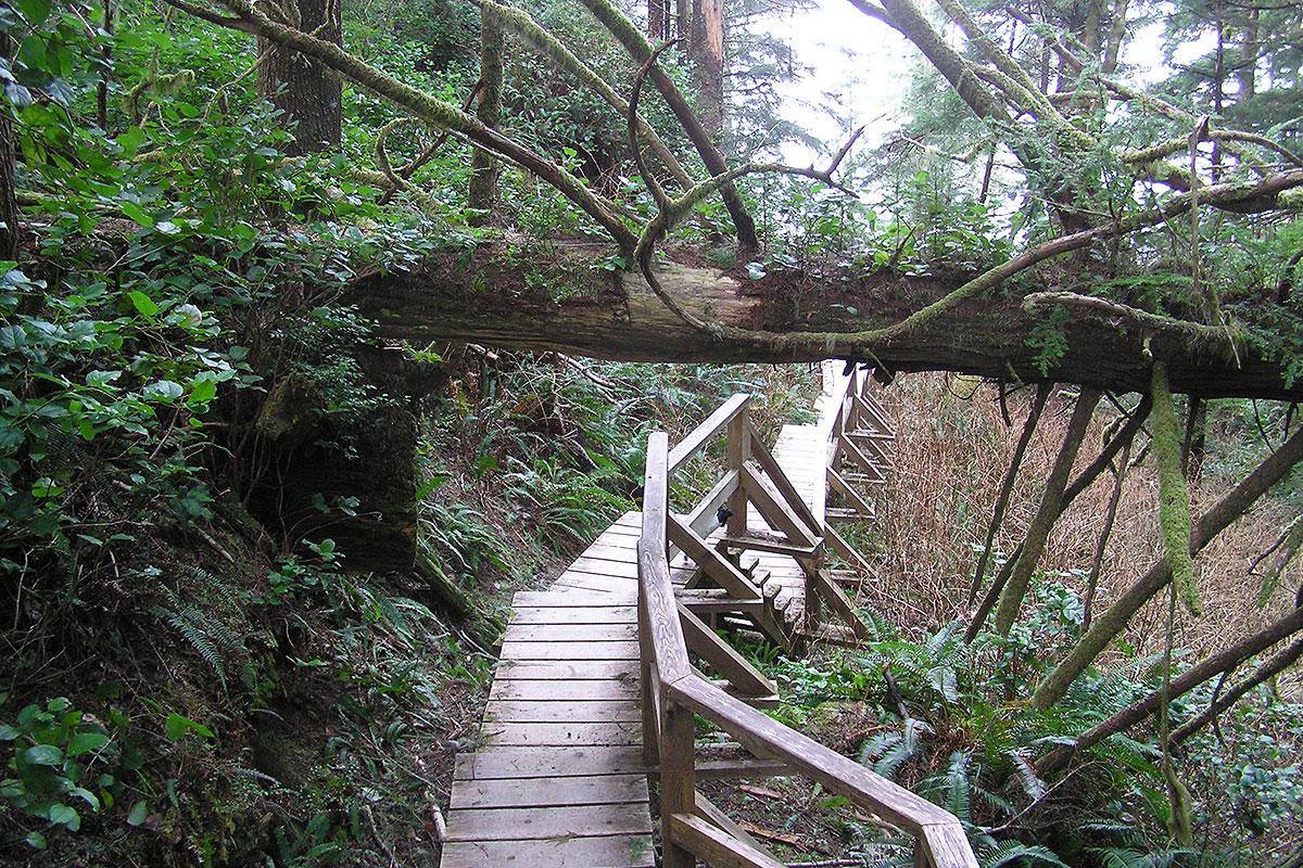 Halfmoon Bay Beach Trail, Tofino, BC Beaches and Trails