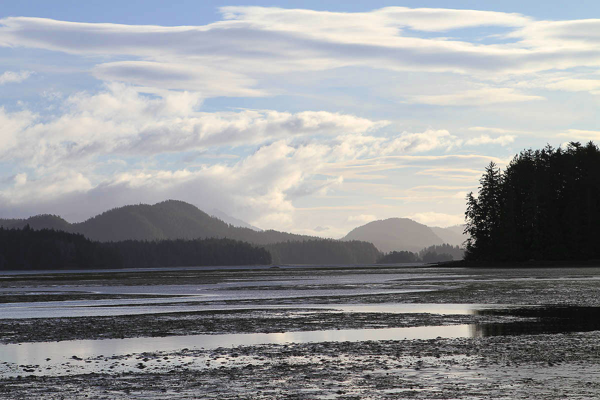 Low Tide is Feeding Time, Tofino Mudflats, Eagles, Heron, Ducks, Otter, Wolves, Feeding Grounds, Peaceful