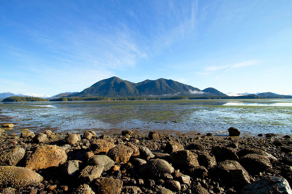 GTC Front Yard, Tofino Mudflats, Eagles, Heron, Ducks, Otter, Wolves, Feeding Grounds, Peaceful