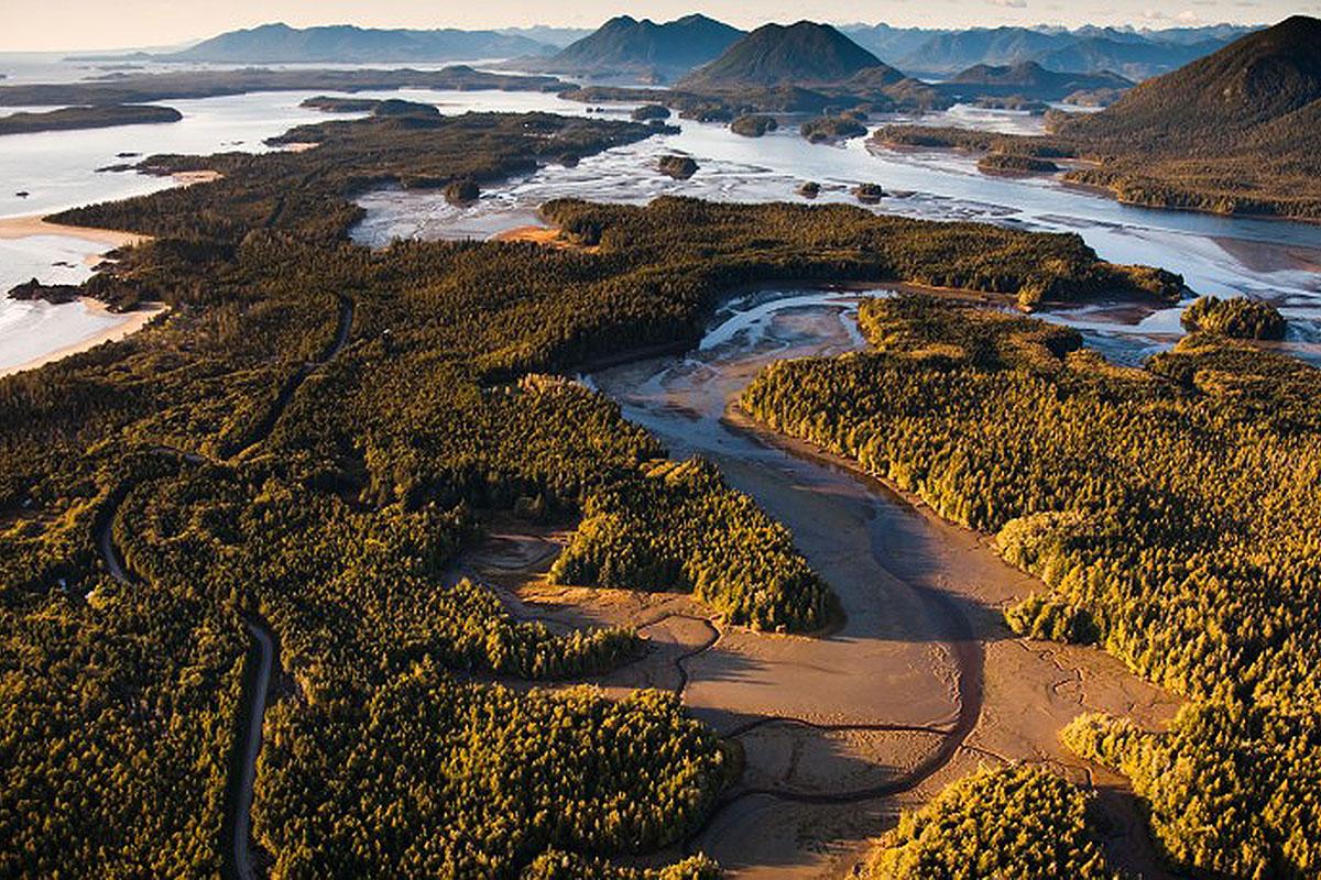 Tofino Mudflats, Eagles, Heron, Ducks, Otter, Wolves, Feeding Grounds, Peaceful