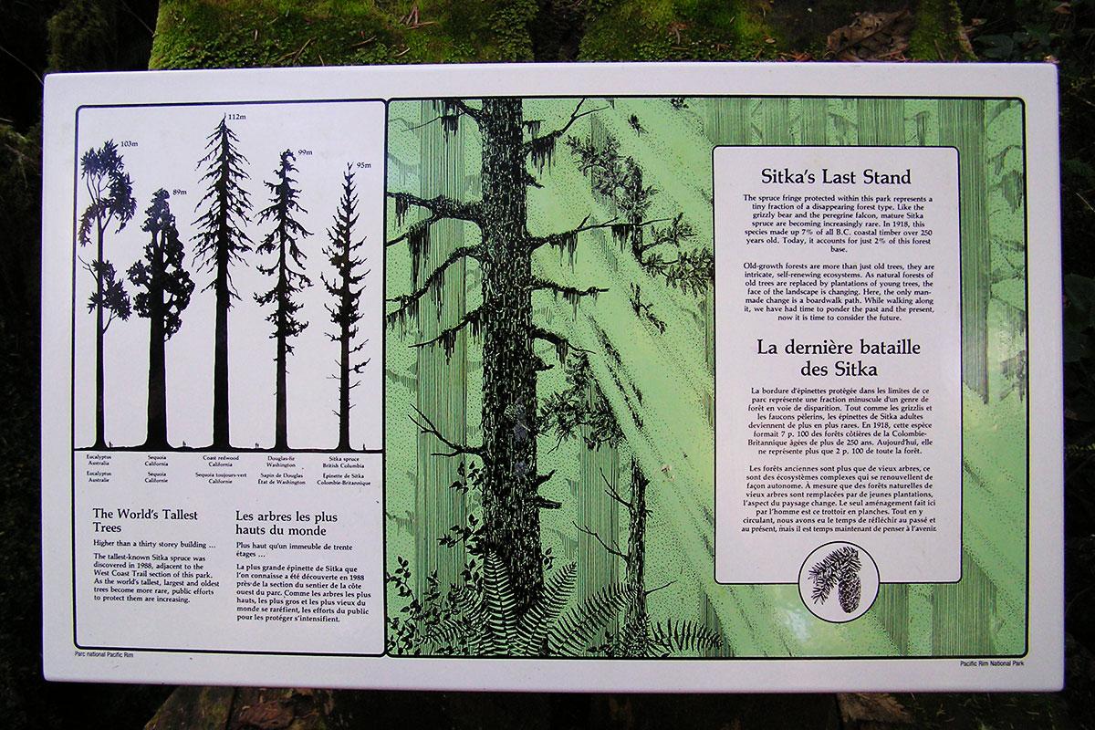 Spruce Fringe Trail, Pacific Rim National Park, Tofino, BC